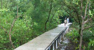 pelestarian mangrove