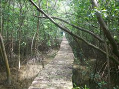 mangrove dan struktur ekonomi